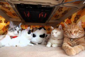 海外「猫とこたつはぜったい相性抜群!」6匹の猫に世界がメロメロ(海外の反応)