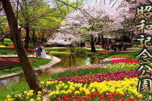 海外「東京の素晴らしい公園!」春の昭和記念公園を4Kで撮影した動画が話題に(海外の反応)