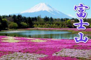 海外「富士山の麓の桜はきれいだね!」富士芝桜まつりの動画に反響(海外の反応)