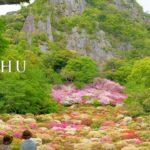 海外「日本の春の美しさ!これは天国への道!」九州の公園の花まつりを撮影した動画に反響(海外の反応)